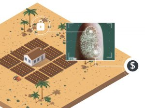 zambia farm project